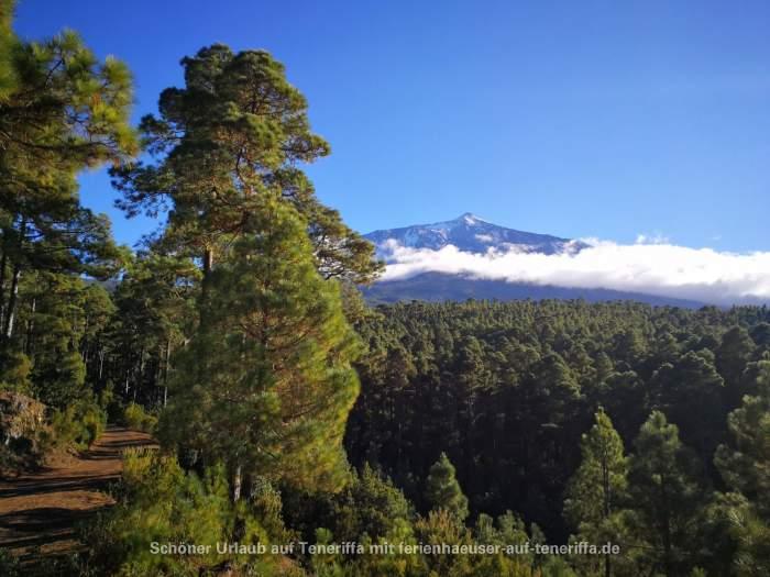 Corona Forestal / El Lagar Teneriffa