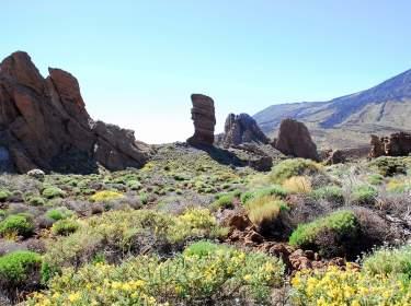 Teide Nationalpark Teneriffa Pflanzen und Felsen