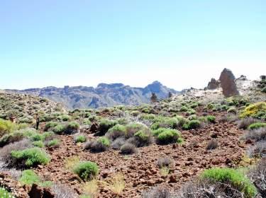 Teide Nationalpark Teneriffa Flora